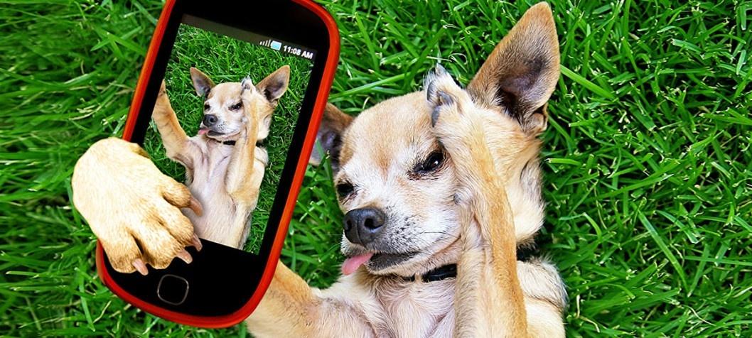 Фикус-блогер и собака-препод: ТОП-7 необычных Insta-аккаунтов из Днепра