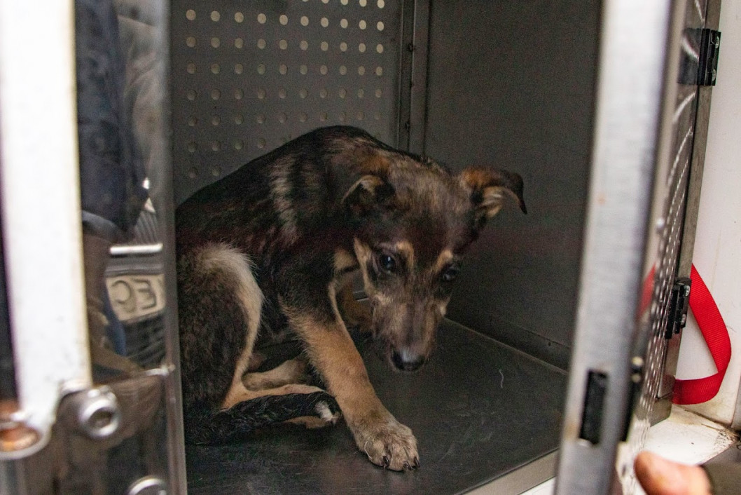 Что сделали с собаками, которых спасли из харьковской живодерни и привезли в Днепр (ФОТО)