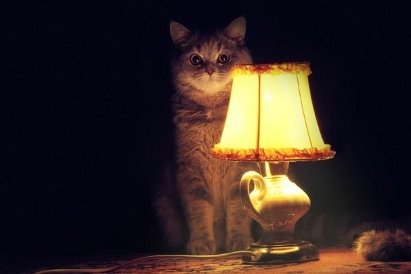 Домашний кот и электрическая лампа.
