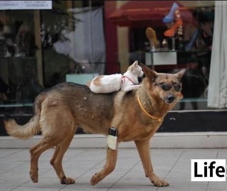 В Днепре появится зоошериф и координационный совет для помощи бездомным животным