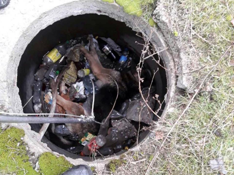 Мог погибнуть: в Днепре пес всю ночь пролежал в колодце на куче мусора (ФОТО)