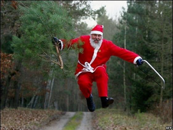 """""""Праздничный"""" вор: на Днепропетровщине мужчина пытался украсть елку из сквера"""