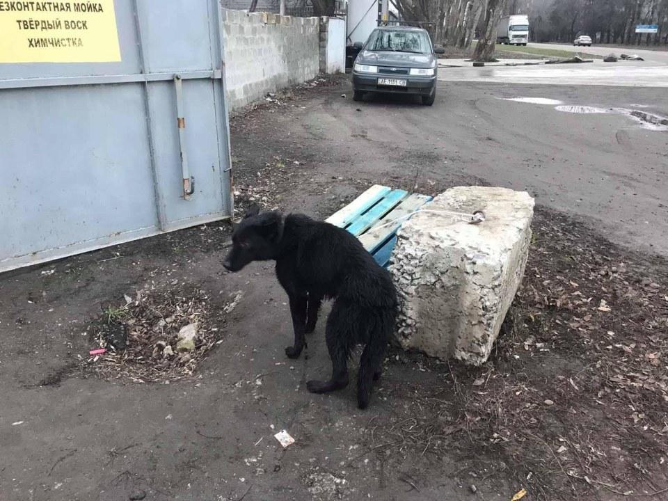На дне декабрьского колодца: спасатели Днепра вызволили собаку с ошейником (ФОТО)
