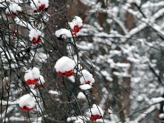 Какая погода будет в Днепре 5 декабря