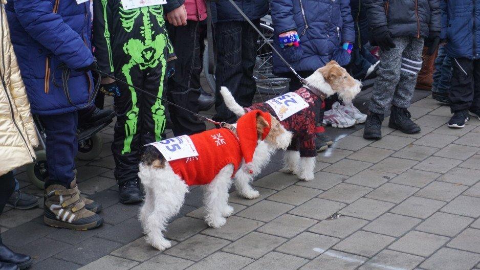 Собаки-бегуны – участники благотворительного забега в 2018 году, Днепр.