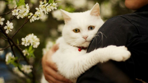 Застрял в своей же ванной: в Кривом Роге спасатели освобождали кота