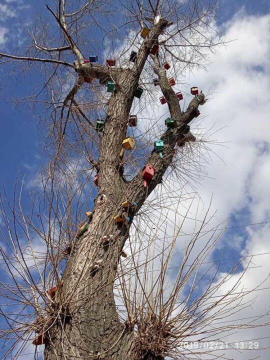 Дерево-скворечник в Никополе.