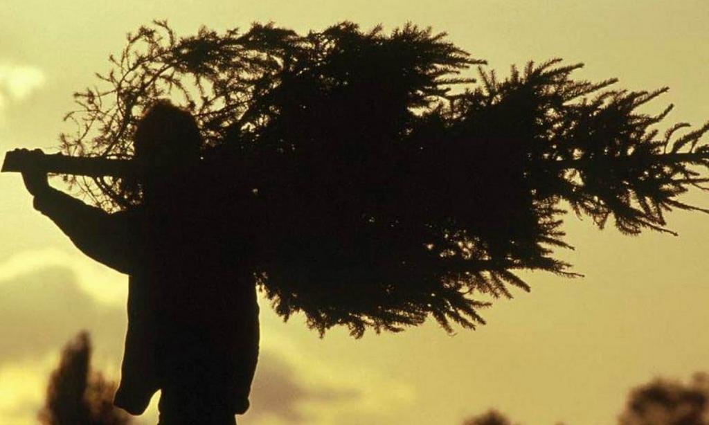 В Днепре рассказали, как опознать краденую елку