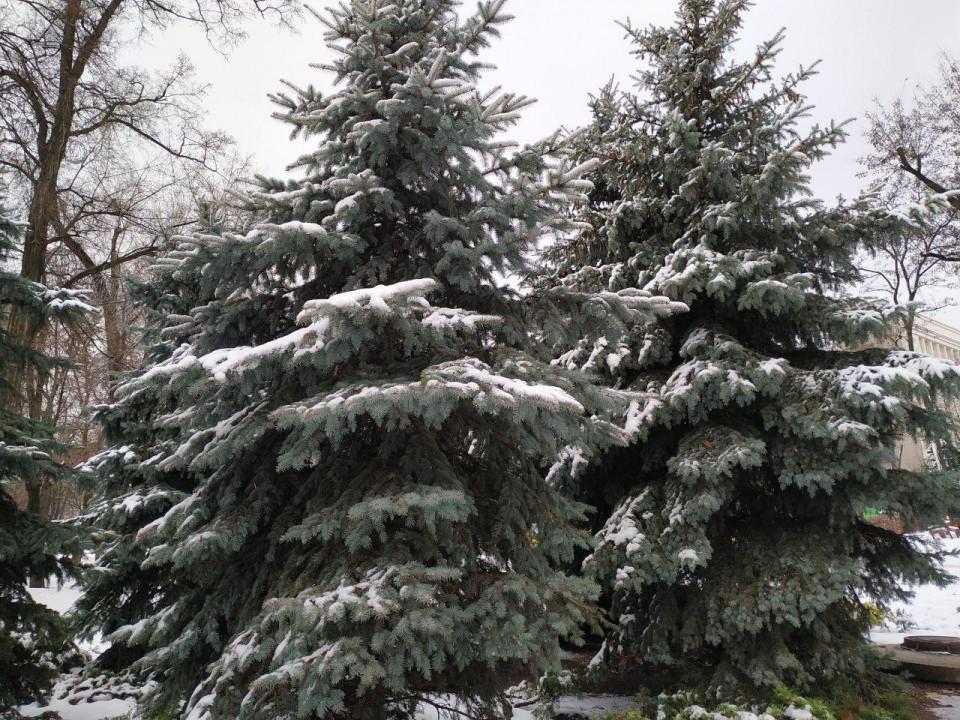 Первый снег сделал город красивее