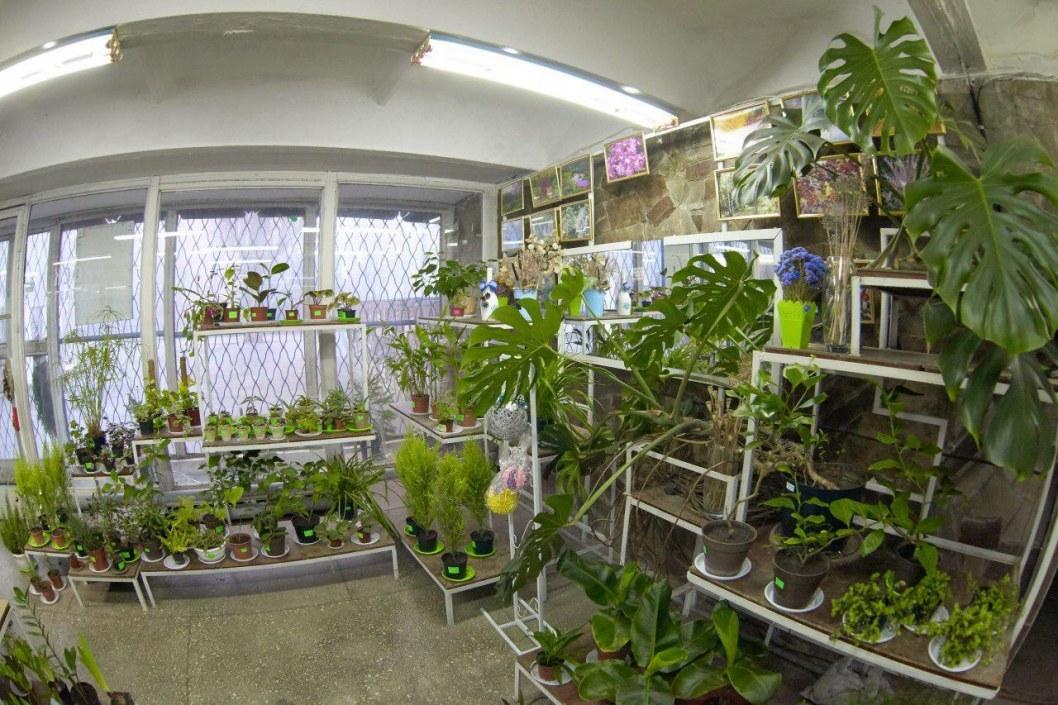 Новогодняя распродажа комнатных растений