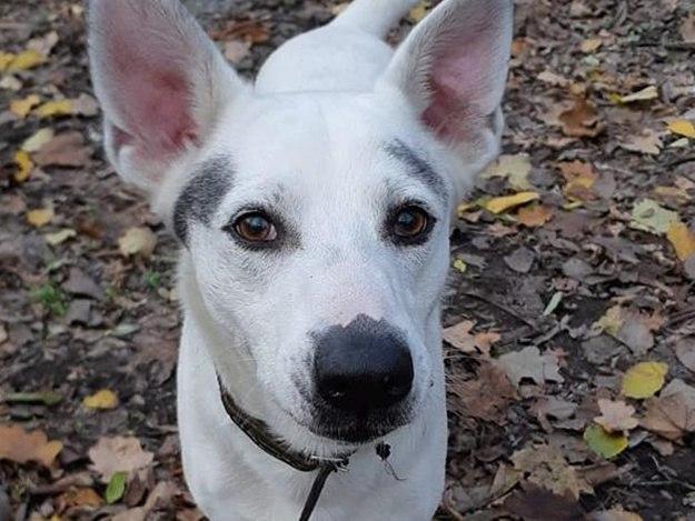 Ничего святого: в Днепре на Гагарина неизвестные украли привязанную у магазина собаку