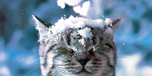 Какая погода будет в Днепре 5 января