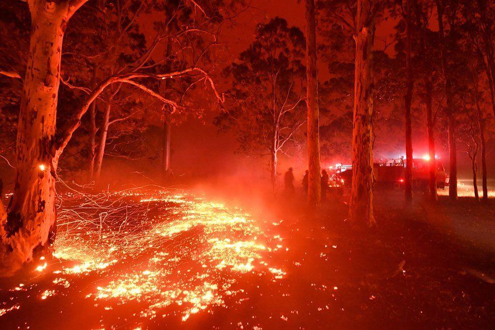 Украина поможет Австралии справиться с лесными пожарами - Аваков