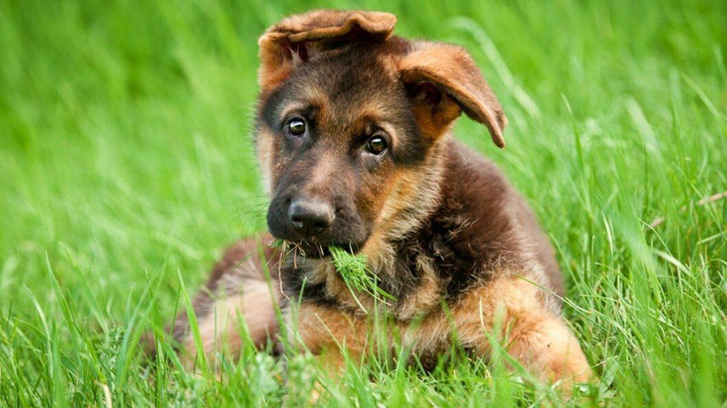 Мохнатые беглецы: в Днепре патрульные вернули хозяйке сбежавших собак