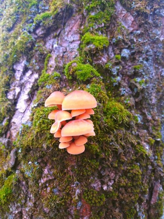 Зимний лес с грибами в декабре.