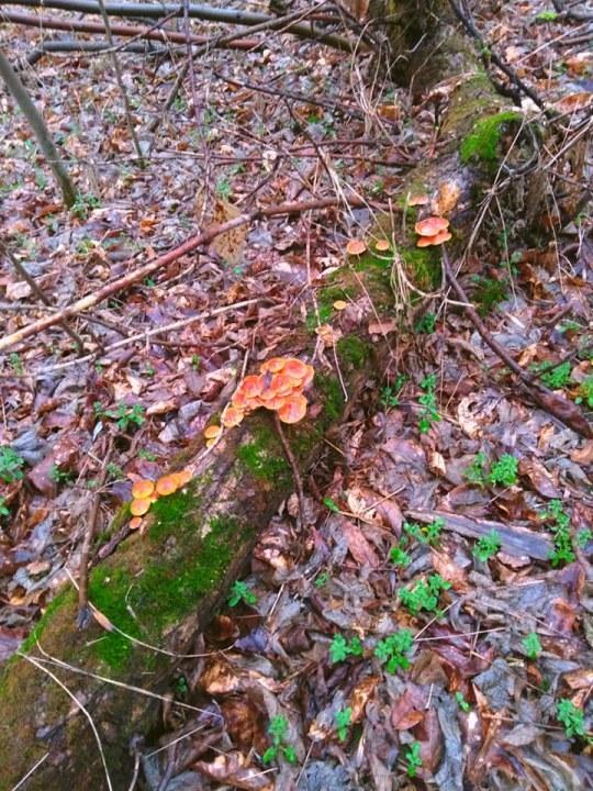 На деревьях из-за весенней влажности вовсю растут грибы.