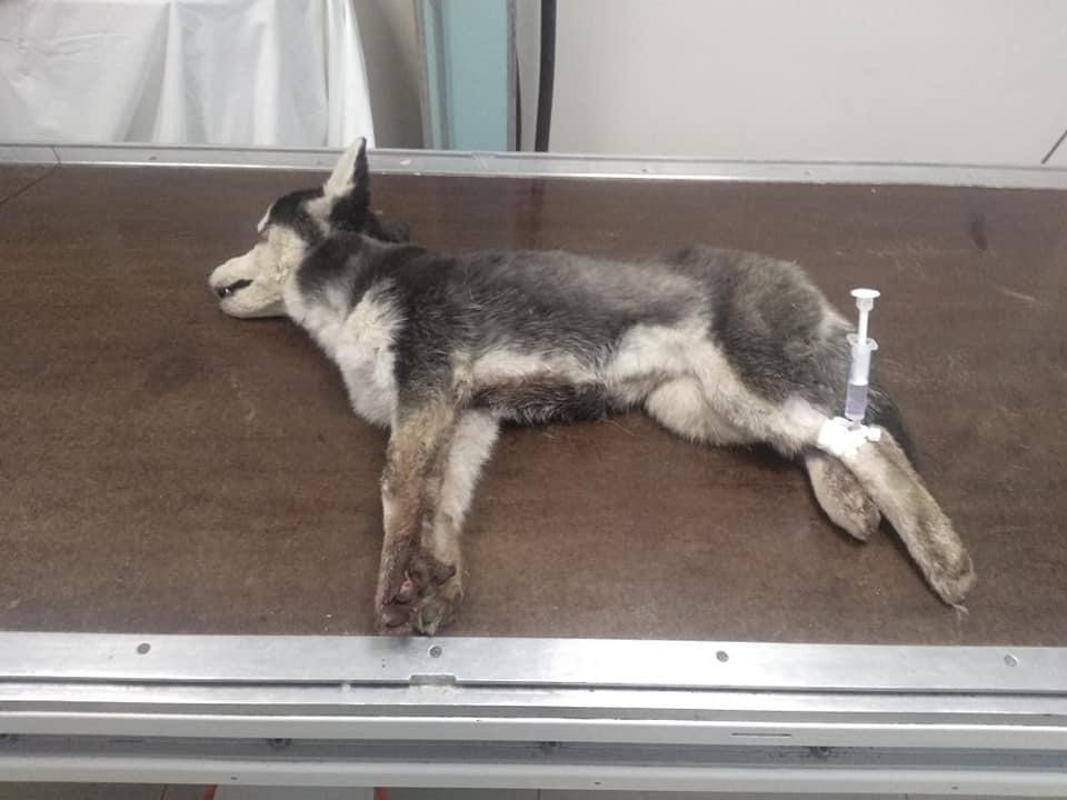 Изверги, не иначе: на Днепропетровщине живодёры повесили щенка на дереве (ФОТО)