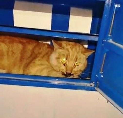 Бедолага прятался в почтовом ящике: в Днепре волонтеры пытаются спасти избитого котика