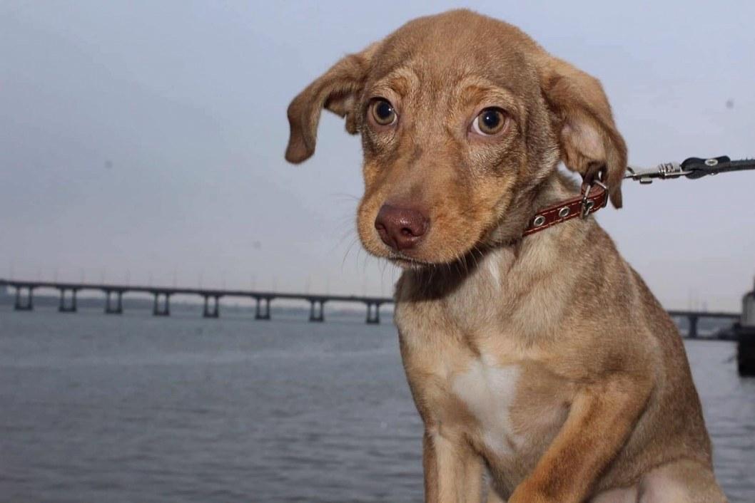 В Днепре ищут хозяина бездомного щенка