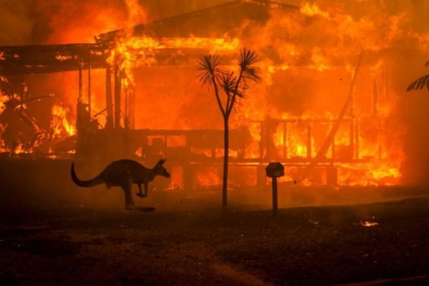 Австралия в огне: на пожарах погибли 24 человека и полмиллиарда животных (ФОТО)