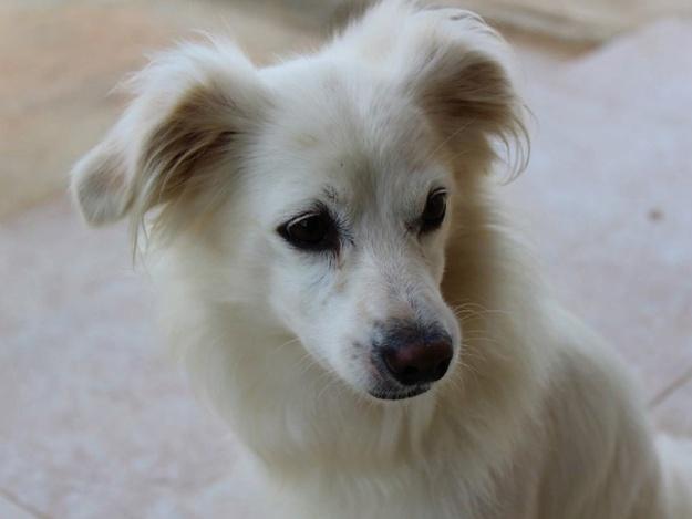 Собаку, которую сбросили с моста в Запорожье, прооперировали и она чувствует себя лучше
