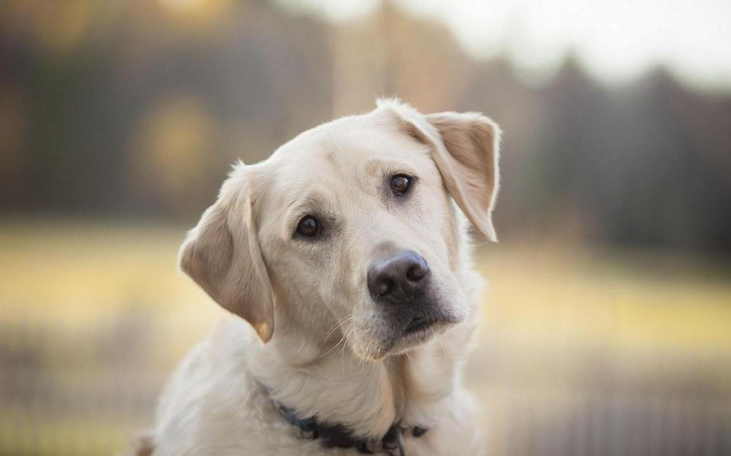 Человеческая доброта: в Днепре из заброшенного колодца вытащили собаку