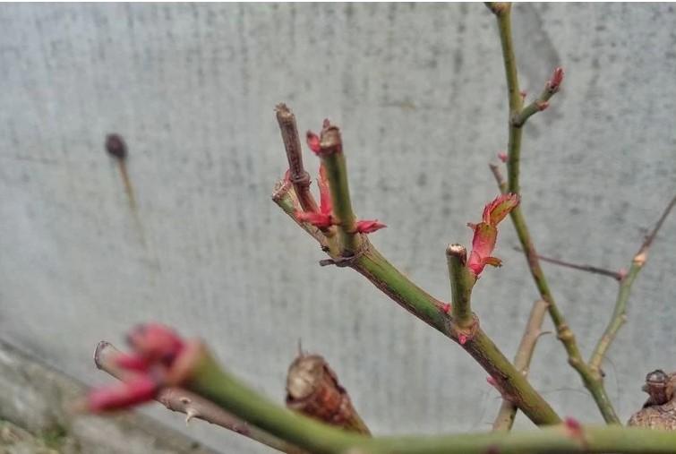 Растения 3 января в Никополе.