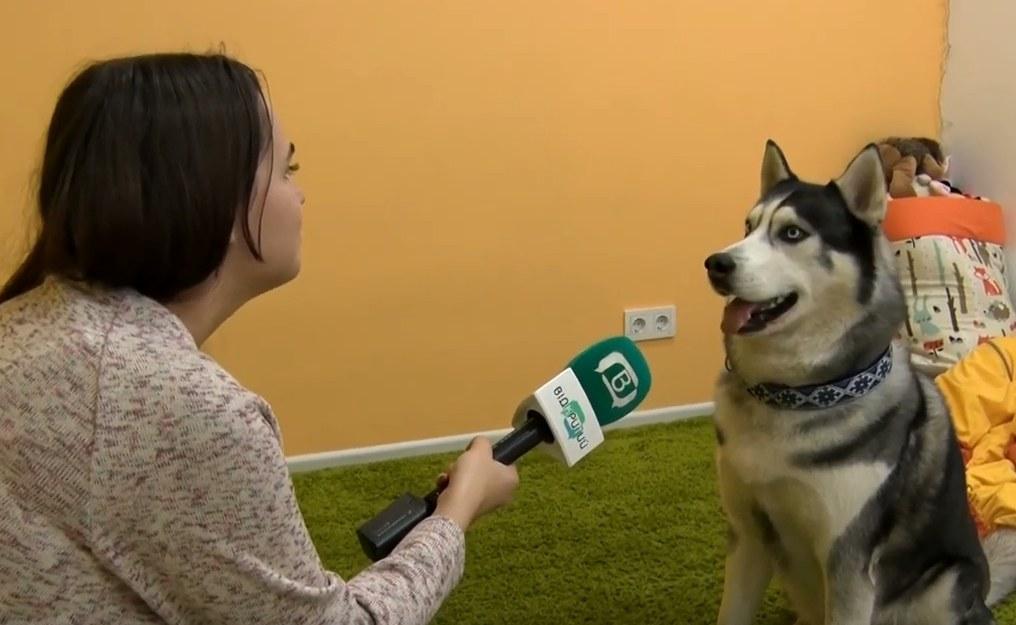 ВІДЕО: У Дніпрі  вивчати англійську дітям допомагає пес