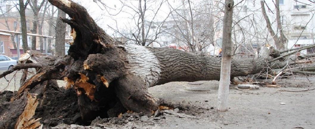 Картина маслом: на детскую площадку в Днепре упало гнилое дерево (ФОТО)