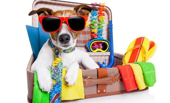 Літній відпочинок: плануйте вже зараз