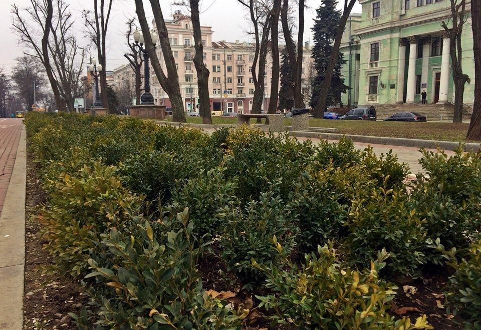 В Днепре на проспекте Яворницкого высадили вечнозеленые кусты (ФОТО)