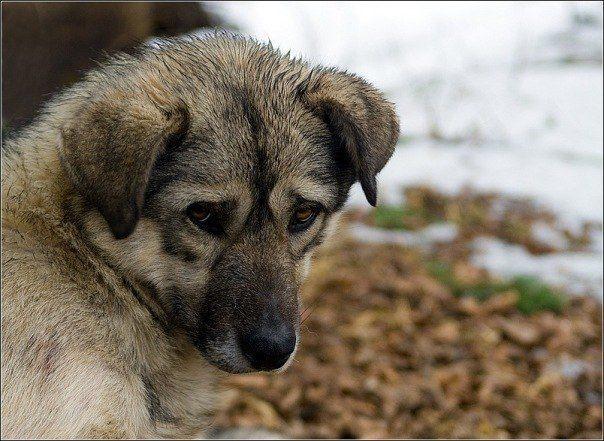 В Кривом Роге полицейский-живодер проткнул вилами собаку, а затем бросил ее в костер