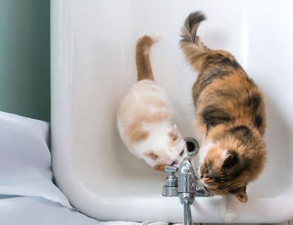В Днепре некоторые дома сегодня останутся без воды