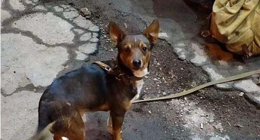 Доброе сердце: в Днепре местная жительница спасла собачку умершего бездомного