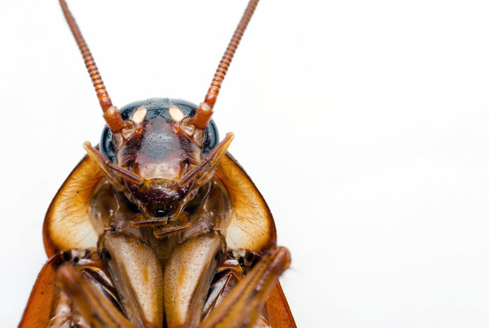 Неприятная покупка: под Днепром мужчина приобрел пачку спагетти с насекомыми внутри (ВИДЕО)