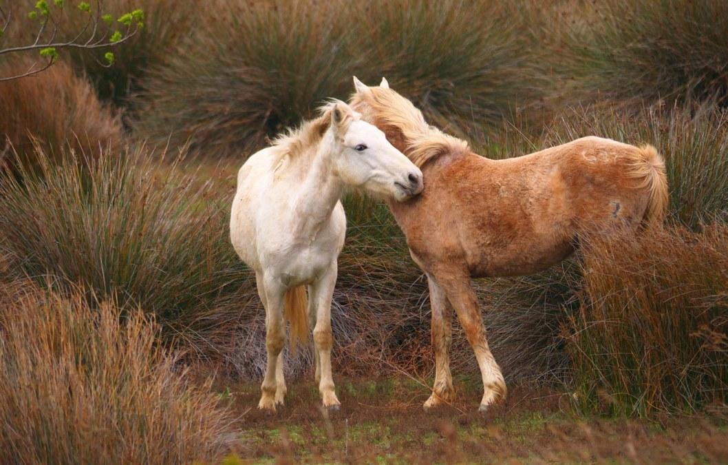 loshadi koni para trava dva konia 1 1