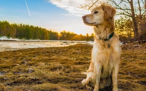 И в огонь, и в воду: в Днепре волонтеры в метель поплыли на остров, чтобы спасти собак (ВИДЕО)