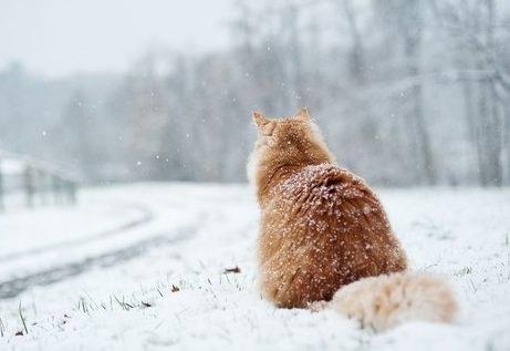 В Днепр идет снежная буря: объявлено штормовое предупреждение