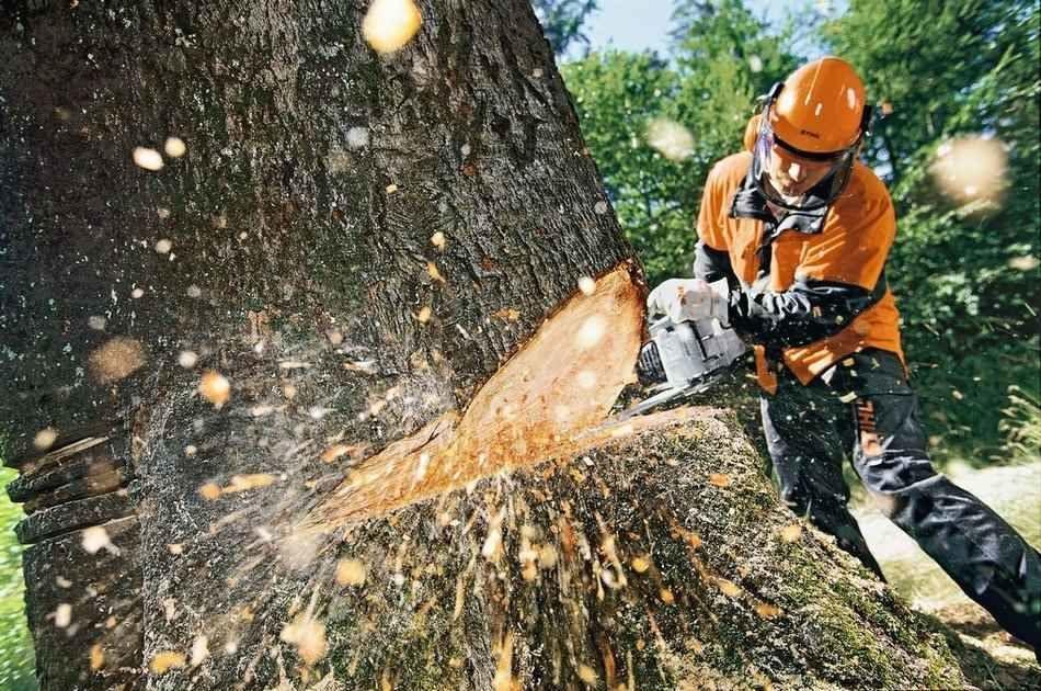 Вырубили все деревья: в Днепре на месте сквера построят торговый центр