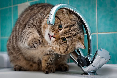 Внимание! Где в Днепре не будет воды!
