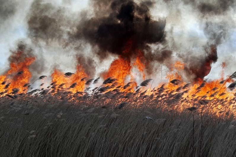 Люди, очнитесь: на Днепропетровщине произошли массовые пожары в экосистемах (ФОТО, ВИДЕО)