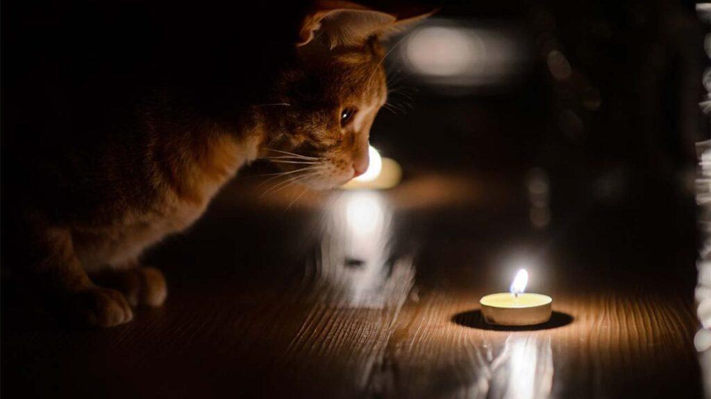 В Днепре несколько районов останутся без света 18 марта: ищи свой адрес