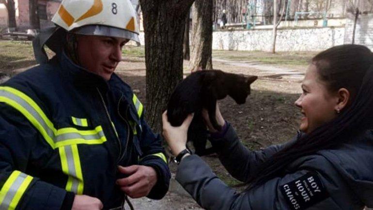 Под Днепром спасатели помогли котенку, который не мог слезть с дерева двое суток