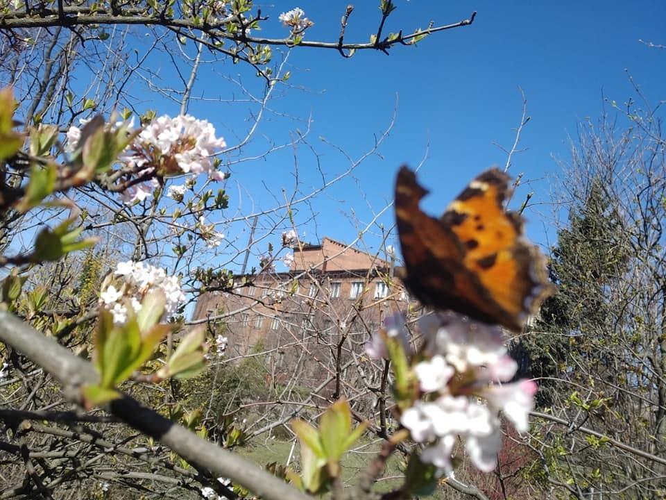 Цветочный флешмоб: с приходом весны в ботсаду Днепра зацвели больше 20 растений (ФОТО)