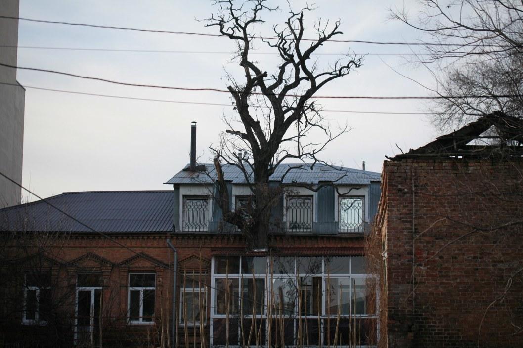 Сквозь балкон растет дерево.