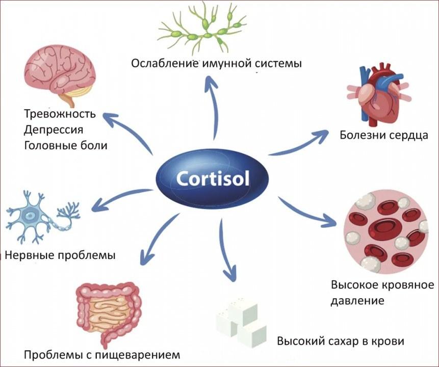 Влияние высокого уровня кортизола на организм