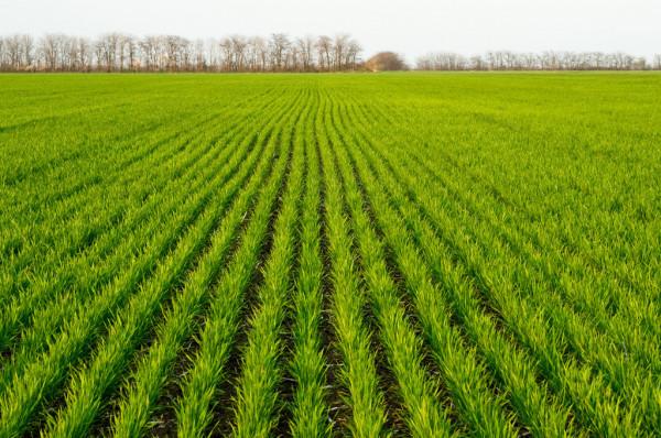 ВІДЕО: Якими будуть ціни та врожай: прогнози експертів