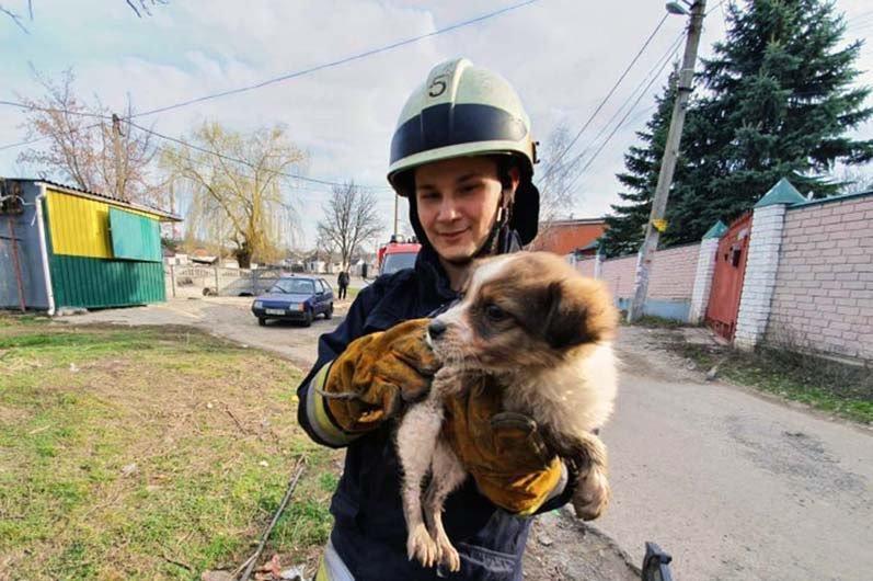 В Днепре спасатели достали маленького щенка из колодца