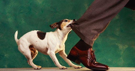 Укусила собака — что делать, куда обращаться | Відкритий