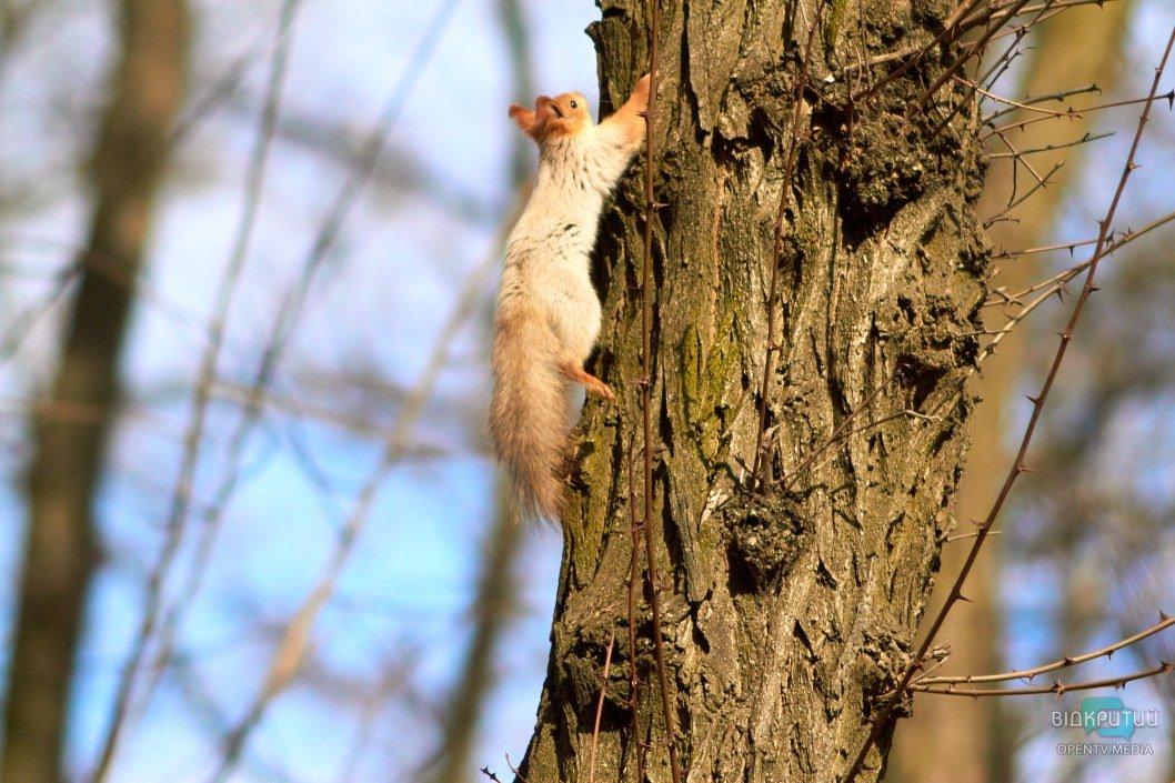 """В парке Гагарина белки """"летают"""" меж деревьев"""